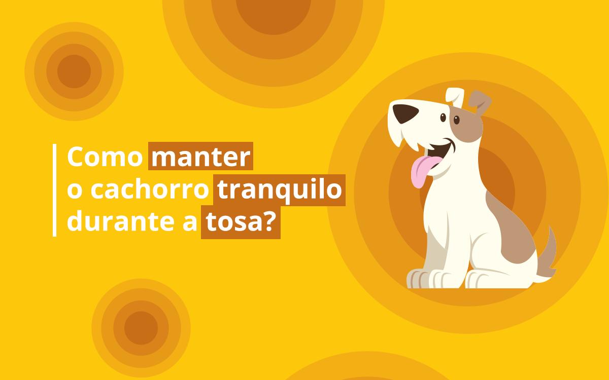 Como manter o cachorro tranquilo durante a tosa?